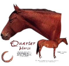 Quarter Horse T-Shirt - Facts