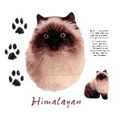 Himalayan Cat T-Shirt - Facts