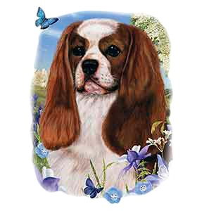 Cavalier King Charles Spaniel T-Shirt - Illustration