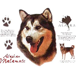 Alaskan Malamute T-Shirt - History Collection