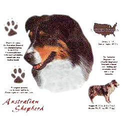 Australian Shepherd T-Shirt - History Collection