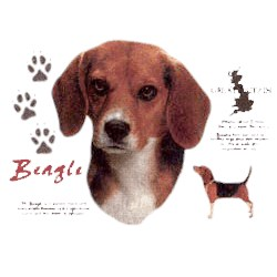 Beagle T-Shirt - History Collection