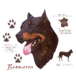 Beauceron T-Shirt - History Collection