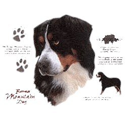 Bernese Mountain Dog T-Shirt - History Collection