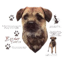 Border Terrier T-Shirt - History Collection