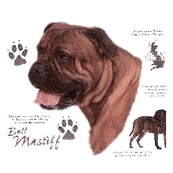 Bullmastiff T-Shirt - History Collection