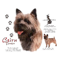 Cairn Terrier T-Shirt - History Collection
