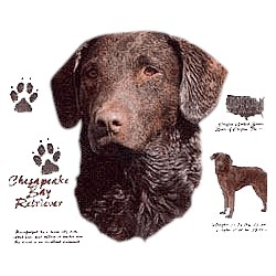 Chesapeake Bay Retriever T-Shirt - History Collection