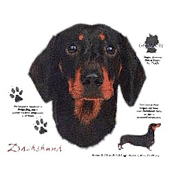 Black & Tan Dachshund T-Shirt - History Collection