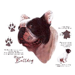 French Bulldog T-Shirt - History Collection