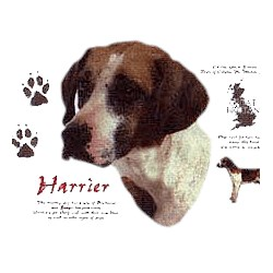 Harrier T-Shirt - History Collection