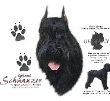 Giant Schnauzer T-Shirt - History Collection