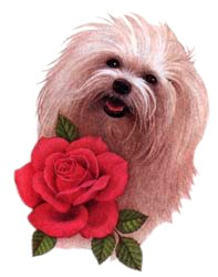 Maltese T-Shirt - With Rose