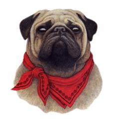 Pug T-Shirt - With Attitude
