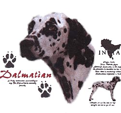Dalmatian T-Shirt - History Collection