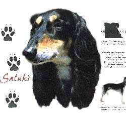 Saluki T-Shirt - History Collection