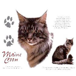 Maine Coon Cat T-Shirt - Facts