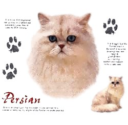 Persian Cat T-Shirt - Facts