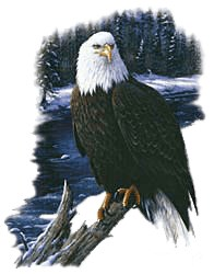 Eagle T-Shirt - Awe Inspiring
