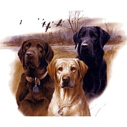 Black Lab T-Shirt - Trio of Three