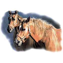 Palomino Horse T-Shirt - A Cute Couple