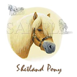 Shetland Pony T-Shirt - Finely Detailed