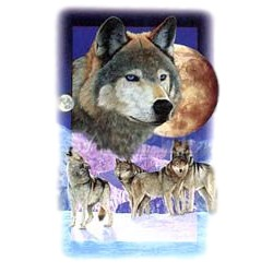 Wolf T-Shirt - Colorfully Portrayed