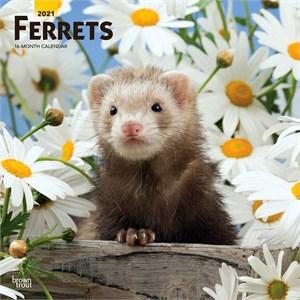 Ferrets Calendar 2015
