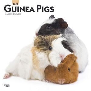 Guinea Pigs Calendar 2015