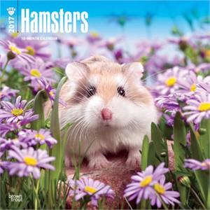Hamsters Calendar 2015