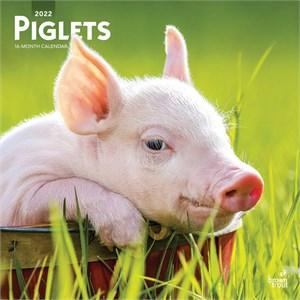 Pigs Calendar 2015