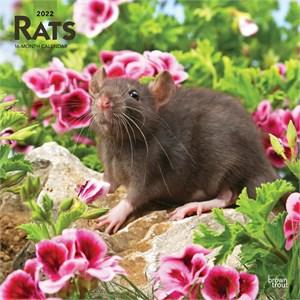 Rats Calendar 2015