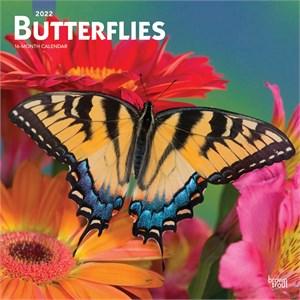 Butterflies Calendar 2015