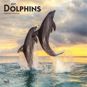 Dolphins Calendar 2015