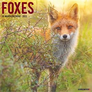 Foxes Calendar 2016