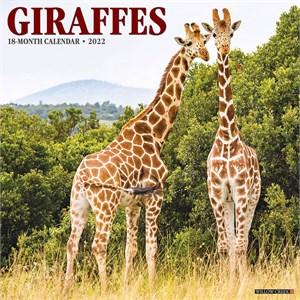 Giraffes Calendar 2015