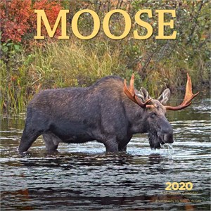 Moose Calendar 2015