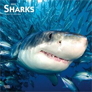 Sharks Calendar 2016