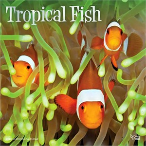 Tropical Fish Calendar 2015