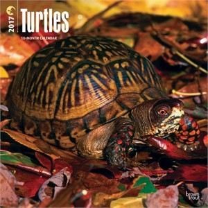 Turtles Calendar 2016
