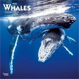 Whales Calendar 2015