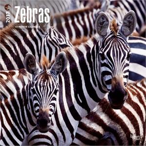 Zebras Calendar 2015