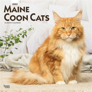 Maine Coon Cats Calendar 2015