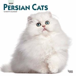 Persian Cats Calendar 2015