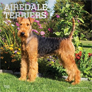 Airedale Terriers Calendar 2015
