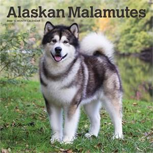 Alaskan Malamutes Calendar 2015