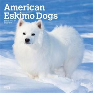 American Eskimo Dogs Calendar 2015
