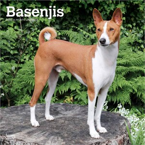 Basenjis Calendar 2016