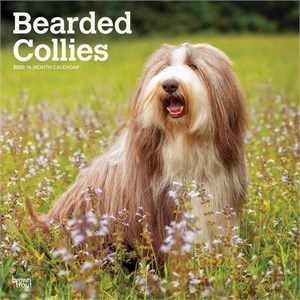 Bearded Collies Calendar 2016