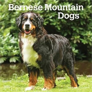 Bernese Mountain Dogs Calendar 2014